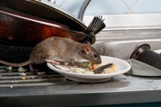 Rodent Control Management based on IoT Technologies